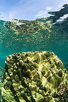 Healthy coral at Olowalu, Maui, Hawaii.