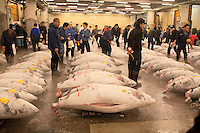 Tuna buyers lioiks for the best fish