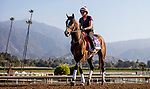 OCT 27: Breeders' Cup Juvenile Turf entrant Peace Achieved, trained by Mark E. Casse,  at Santa Anita Park in Arcadia, California on Oct 27, 2019. Evers/Eclipse Sportswire/Breeders' Cup
