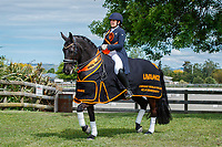 00-Dressage NZ - unmarked for promotional use