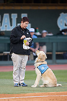 "North Carolina Tar Heels ball dog ""Remington"" looks up at head athletic trainer Terri Jo Rucinski between innings of the game against the Kentucky Wildcats at Boshmer Stadium on February 17, 2017 in Chapel Hill, North Carolina.  The Tar Heels defeated the Wildcats 3-1.  (Brian Westerholt/Four Seam Images)"