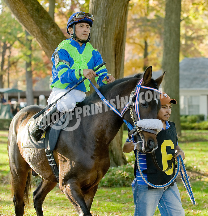 Queens Ransom BVF before The Delaware Park Arabian Juvenile Championship at on 11/2/11
