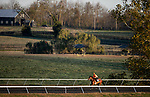 November 2, 2020: One Master, trained by trainer William John Haggas, exercises in preparation for the Breeders' Cup Mile at  Keeneland Racetrack in Lexington, Kentucky on November 2, 2020. Alex Evers/Eclipse Sportswire/Breeders Cup