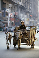 In Egypt, children are employed in agriculture, even driving the carts alone through heavy traffic in towns. - Child labor as seen around the world between 1979 and 1980 - Photographer Jean Pierre Laffont, touched by the suffering of child workers, chronicled their plight in 12 countries over the course of one year.  Laffont was awarded The World Press Award and Madeline Ross Award among many others for his work.