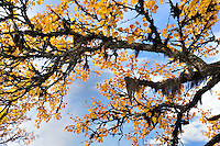 NO - Prov. HEDMARK<br /> Autumn colours in the Sölen mountain range<br /> <br /> Full size 69,4 MB