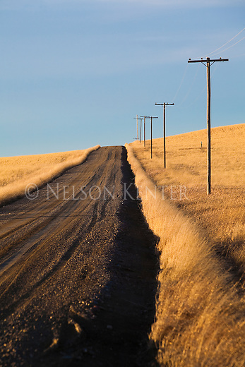 A rural road through wheat fields in eastern Montana