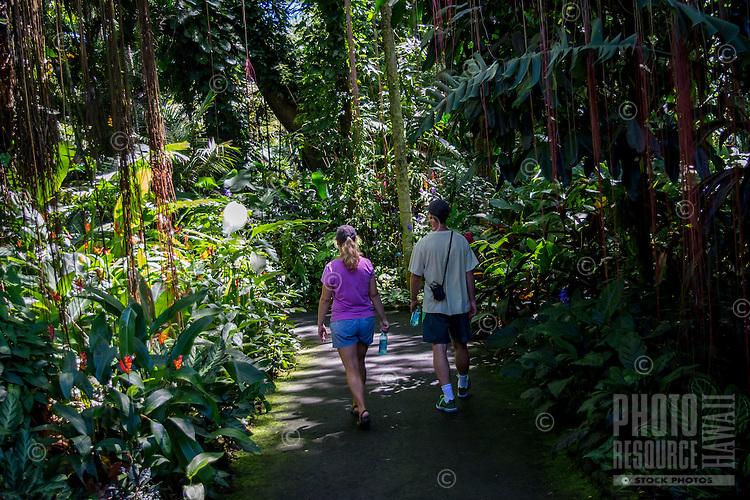 Tourists walk through the rain forest at Hawaii Tropical Botanical Garden, Papa'ikou, Big Island of Hawaiʻi.