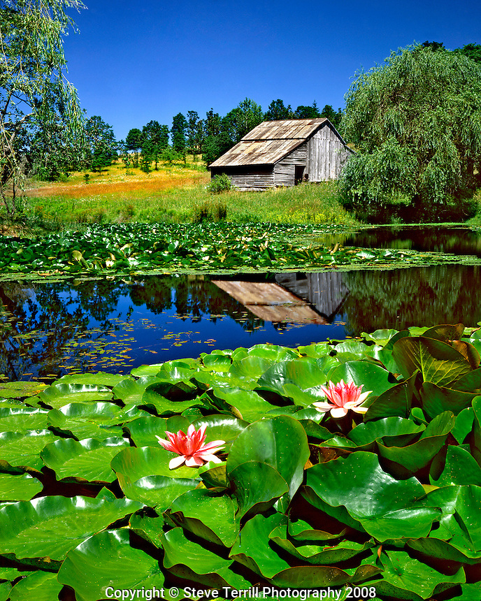 USA, Oregon, Old barn reflecting in pond with waterlilies near the town of Dallas