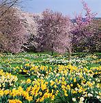 Great Britain, England, Hampshire: Landscape in Spring | Grossbritannien, England, Hampshire: Fruehling im Sueden Englands