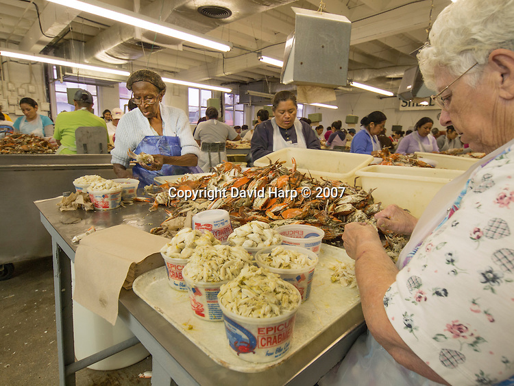 Representing more than 130 years of crab picking, Nicie Jones, left and Charlotte Jones are the last two local pickers at Claytons.   Nicie retired at the end of 2013.