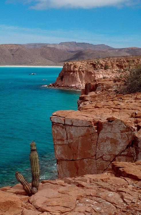 Baja, Mexico, Isla Espiritu Santo, cactus, Pitya Dulce, Sea of Cortez, perfect, sunlit, crystal clear water, arid landscape - ideal for sea kayak tours,.