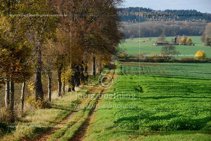 GERMANY, forest and farmland / DEUTSCHLAND, Hessen, Wald und Ackerland im Herbst