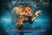 REALISTIC ANIMALS, REALISTISCHE TIERE, ANIMALES REALISTICOS, dogs, paintings+++++SethC_Buster_IMG_5402revPRINT,USLGSC18,#A#, EVERYDAY ,underwater dogs,photos,fotos ,Seth