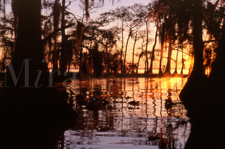Morning at Blue Cypress Lake in Florida.