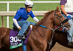 ARCADIA, CA - NOV 01: Metaboss, owned by Mersad Metanovic, M. McFetridge, D. Preiss, M & S Taylor Stables LLC, Blue Skies Stables & C. Azcarate and trained by Philip D'Amato, exercises in preparation for the Breeders' Cup Longines Turf at Santa Anita Park on November 1, 2016 in Arcadia, California. (Photo by Casey Phillips/Eclipse Sportswire/Breeders Cup)