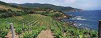 Europe/France/Corse/2B/Haute-Corse/Cap Corse/Luri: Le vignoble de Lina Pieretti
