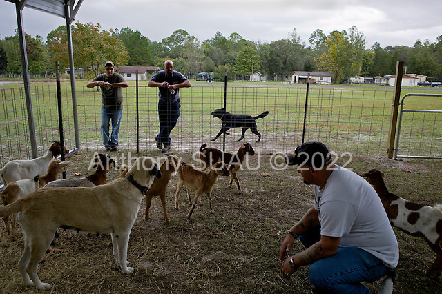 Jacksonville, Florida<br /> November 4, 2013<br /> <br /> Veteran's sustainable farm founded by Purple Heart veteran Adam Burke and managed by Afghan and Iraqi veteran Steve Ellseberry.<br /> <br /> Army veteran Steve Ellseberry sits with the farm's goats which he hopes to raise and sell for a profit as ex-marines Shaun Valdivia (left) and Trey Evans look on.