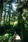 Pacific Rim National Park Rainforest trail in beautiful glowing sunlight. Tofino, Vancouver Island, BC, Canada. Image © MaximImages, License at https://www.maximimages.com