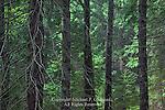 Algerina Swamp State Forest Natural Area, Pennsylvania