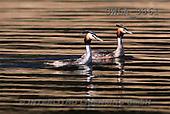 Carl, ANIMALS, wildlife, photos(SWLA3861,#A#)