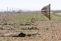 prieto picudo Bodegas Margon , DO Tierra de Leon , Pajares de los Oteros spain castile and leon
