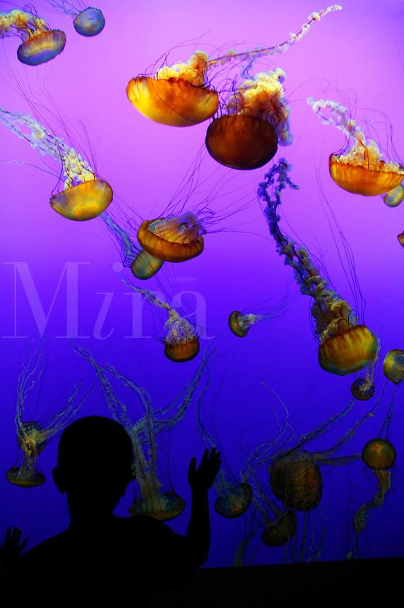 A boy views the living jellies art exhibit at The Monterey Bay Aquarium, Monterey, California