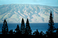 Pine trees and view of Molokai from Maui, Hawaii