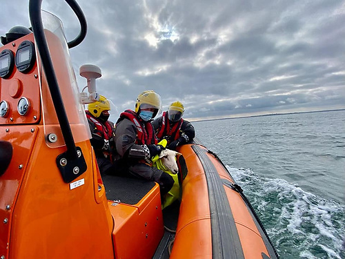 Howth coastguard volunteers with Lucky Louis the lamb after his rescue following a cliff fall on Lambay Island
