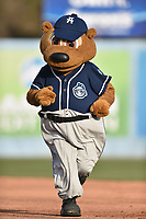 Asheville Tourists mascot Ted E Tourists (00) runs the bases backwards during a game against the Greenville Drive at McCormick Field on April 15, 2017 in Asheville, North Carolina. The Tourists defeated the Drive 5-4. (Tony Farlow/Four Seam Images)