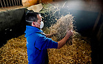 March 18, 2020 : A barn worker spreads hay in a stall while wearing a protective mask. Life goes on at Fair Hill Training Center in Fair Hill, Maryland. While no spectators are allowed at any race facility in the United States, or the world essentially, during the coronavirus pandemic, the horses still need to train and exercise. The Fair Hill Trainer Center in Cecil County in Maryland is still open for business and the equine athletes remain active through the COVID-19 crisis. Scott Serio/Eclipse Sportswire/CSM