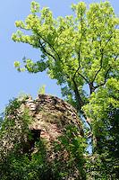 Clingenburg in  Klingenberg am Main, Bayern, Deutschland