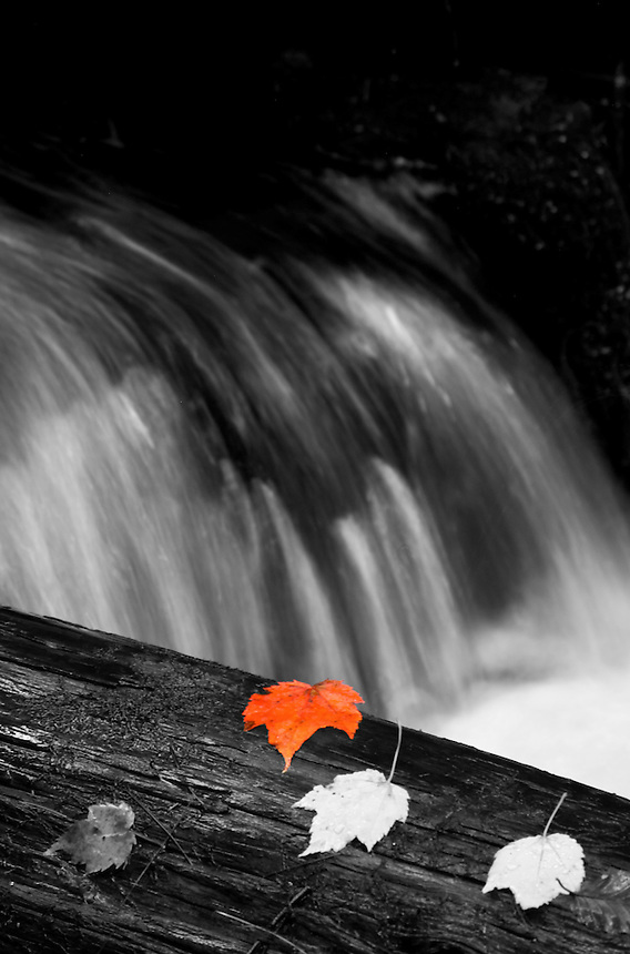 A bright orange maple leaf lays on a log near a small waterfall is the background.