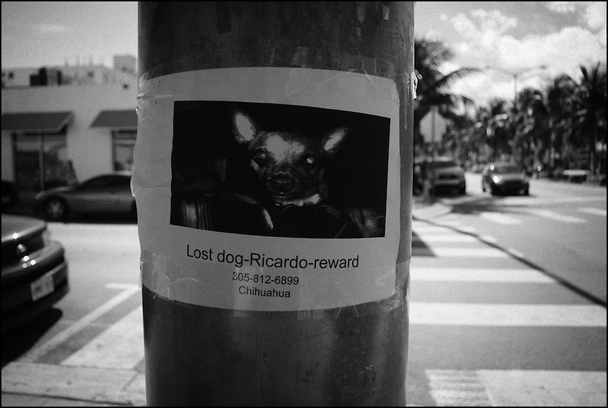 "Lost dog Ricardo reward<br /> From ""Miami in Black and White"" series. Miami Beach, 2009"