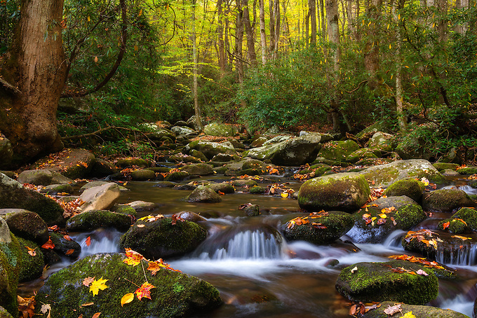 A beautiful backlit scene along roaring forks, dotted with fall colors.