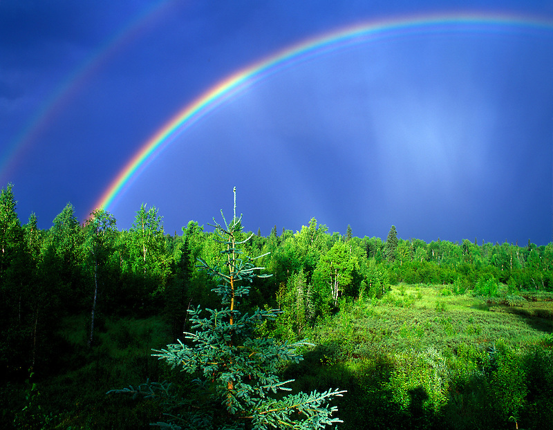 Rainbow over forest. Near Fairbanks, Alaska