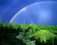 Rainbow over forest. Near Fairbanks, Alaska