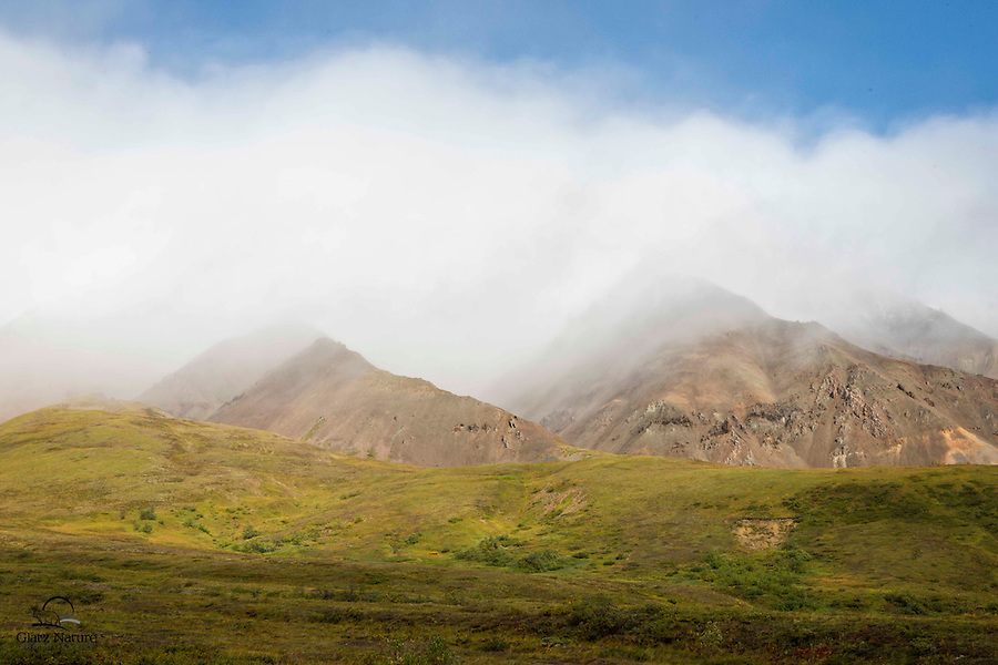 The sun (finally) breaks up the clouds covering a gorgeous mountain range above the golden fall colored valley.  Denali National Park, Alaska.