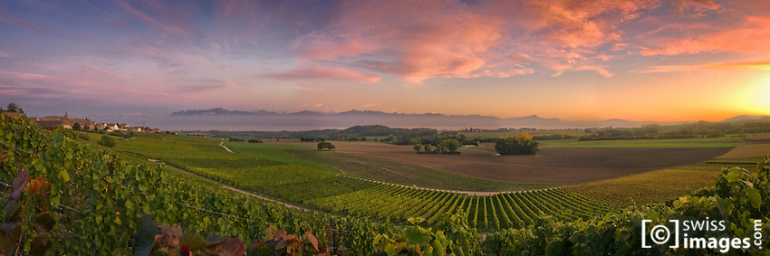 Sunset on vineyards near Yens/Switzerland