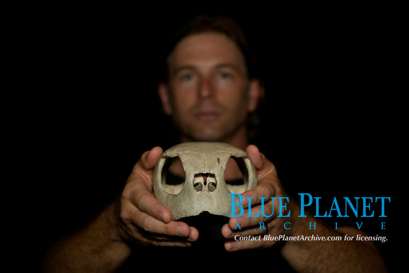 Dr. Wallace J. Nichols on location in Costa Rica holding a sea turtle skull. Parismina, Costa Rica. MR, Caribbean Sea, Atlantic Ocean