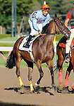 09 September 06: Sky Fever prior to the grade 1 Spinaway Stakes for two year old fillies at Saratoga Race Track in Saratoga Springs, New York.