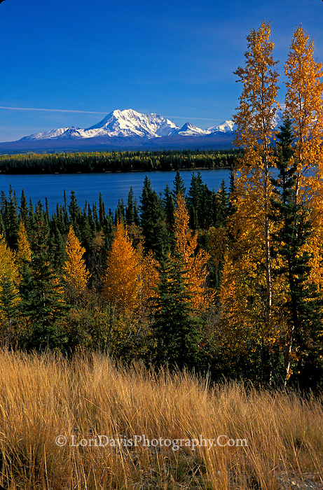 #L22  Autumn in the Wrangell Mountains