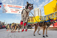 A Ramey Smyth dog jumps to go at the start line on 4th avneue during the ceremonial start of the 2019 Iditarod in downtown Anchorage, Alaska on Saturday March 2<br /> <br /> Photo by Jeff Schultz/  (C) 2019  ALL RIGHTS RESERVED