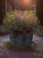 A copper urn encircled by stone flags in a corner of the garden brims with an abundance of yellow flowers
