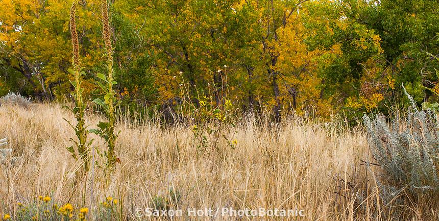 Autumn landscape West Bijou Ranch, Strasburg Colorado; managed by Savory Institute,