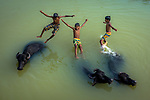 Pictured: Children play and jump on top of large cattle as they all wash themselves in a pond.   The local herders bathe the animals in the water to protect them from insect bites and keep them cool.<br /> <br /> One man wanders around among them in the shallow water while holding an umbrella to keep himself out of the scorching sun.   The images were captured in the town of Garbeta in the Medinipur district of West Bengal, India.   SEE OUR COPY FOR DETAILS<br /> <br /> Please byline: Saurabh Sirohiya/Solent News<br /> <br /> © Saurabh Sirohiya/Solent News & Photo Agency<br /> UK +44 (0) 2380 458800