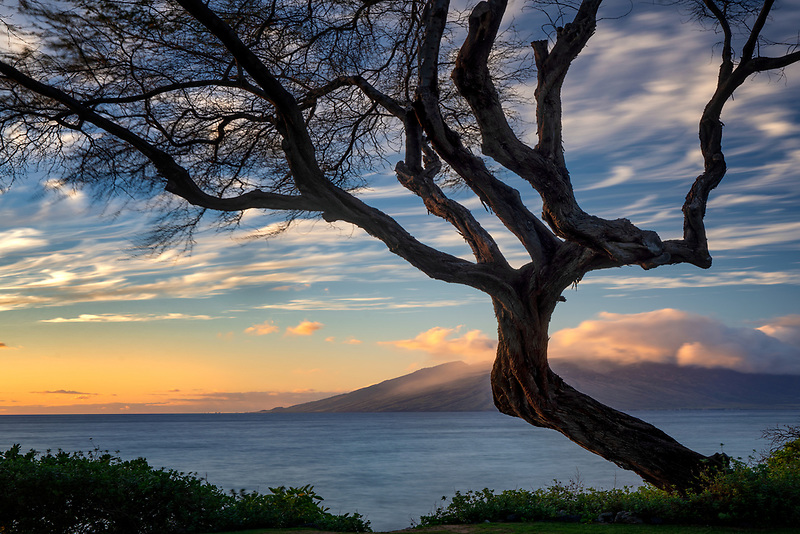 Branching tree and sunset from Maui. West Maui in background. Maui, Hawaii