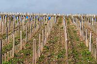 vineyard clos des quatre vents margaux medoc bordeaux france