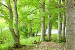 Europa, DEU, Deutschland, Baden-Wuerttemberg, Schwaebische Alb, Bissingen an der Teck, Ochsenwang, Hochflaeche der Schwaebischen Alb, Landschaft, Wald, Natur, Umwelt, Landschaft, Jahreszeiten, Stimmungen, Landschaftsfotografie, Landschaften, Landschaftsphoto, Landschaftsphotographie, <br /> <br /> [Fuer die Nutzung gelten die jeweils gueltigen Allgemeinen Liefer-und Geschaeftsbedingungen. Nutzung nur gegen Verwendungsmeldung und Nachweis. Download der AGB unter http://www.image-box.com oder werden auf Anfrage zugesendet. Freigabe ist vorher erforderlich. Jede Nutzung des Fotos ist honorarpflichtig gemaess derzeit gueltiger MFM Liste - Kontakt, Uwe Schmid-Fotografie, Duisburg, Tel. (+49).2065.677997, ..archiv@image-box.com, www.image-box.com]