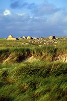 Lush sea grass and boulder landscape, Ireland