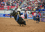 January 2009: CBR points leader Danny McDowell rides Ding-a-ling at the CBR World Championships
